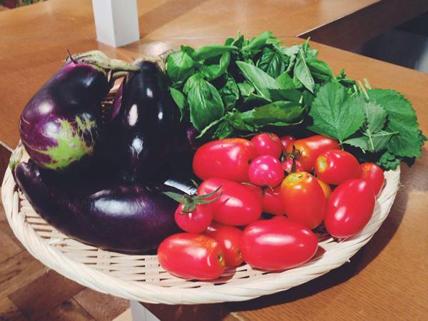 収穫した野菜1 PS